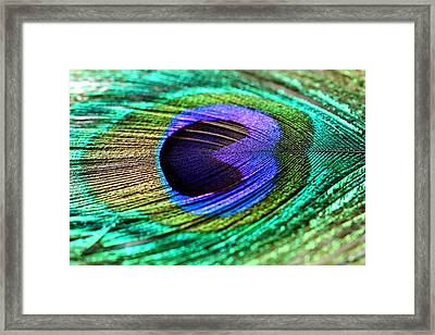 Peacock Feather Framed Print by Heike Hultsch