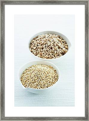 Pearl Barley And Quinoa Seeds Framed Print by Gustoimages