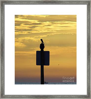 Pelican At Sunset Framed Print by D Hackett