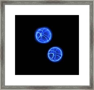 Peridinium Dinoflagellates Framed Print by Gerd Guenther