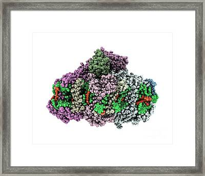 Photosystem I, Molecular Model Framed Print by Laguna Design