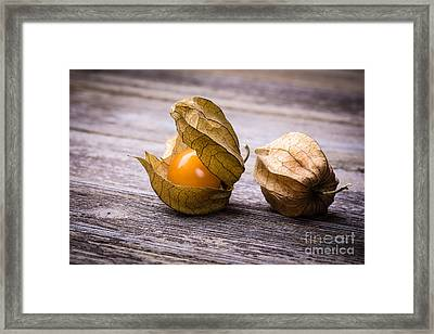 Physalis  Framed Print by Jane Rix
