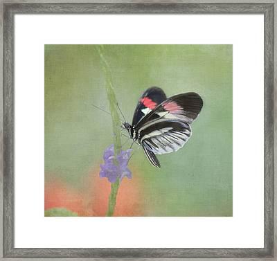 Piano Key Butterfly Framed Print by Kim Hojnacki