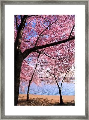 Pink Framed Print by Mitch Cat