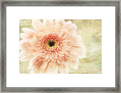 1 Pink Painterly Gerber Daisy Framed Print by Andee Design