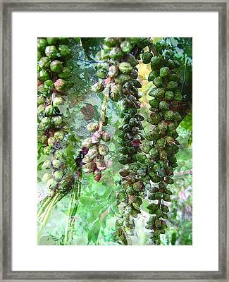 Poplar Secrets Framed Print by Shirley Sirois