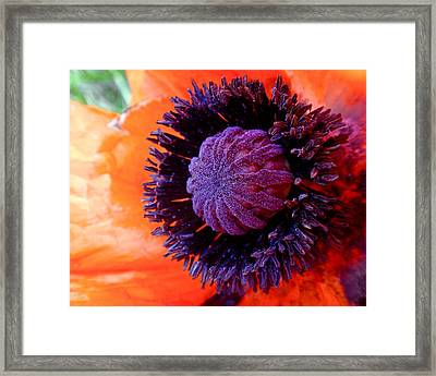 Poppy Framed Print by Rona Black