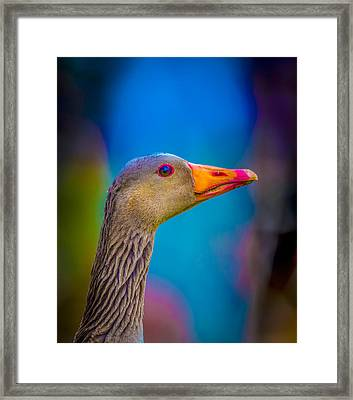 Portrait Of Greylag Goose, Iceland Framed Print by Panoramic Images