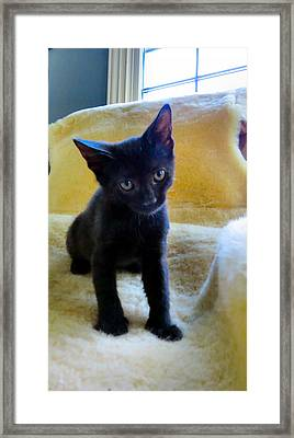 Posing  Framed Print by Michelle Milano