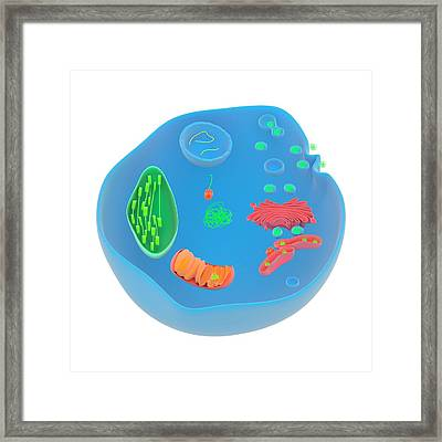 Protein Targeting In Cells Framed Print by Science Photo Library