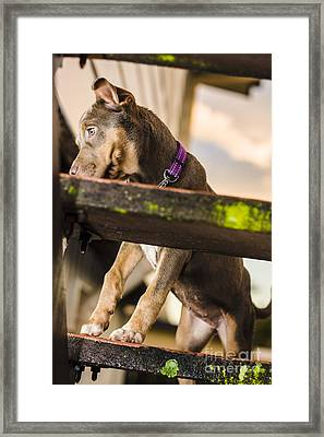 Puppy Dog Walking Up Stairs In A Garden Backyard Framed Print by Jorgo Photography - Wall Art Gallery