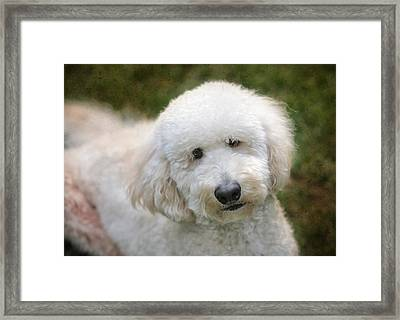 Puppy Portrait Framed Print by Larry Marshall