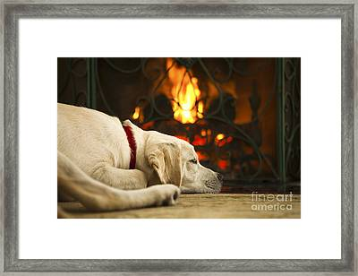 Puppy Sleeping By The Fireplace Framed Print by Diane Diederich