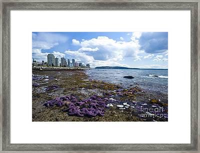 Purple Starfish On A Beach, Canada Framed Print by David Nunuk