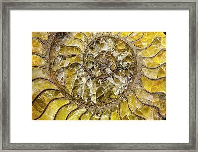 Pyrites Ammonite Spiral Calcite Crystals Framed Print by Paul D Stewart