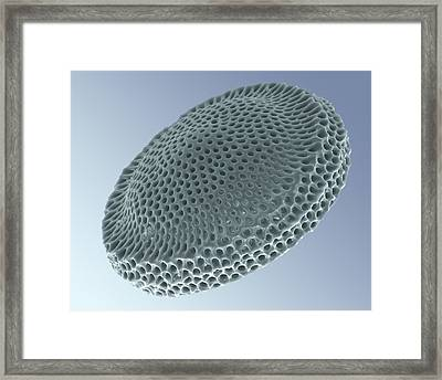 Radiolarian, Sem Framed Print by Science Photo Library