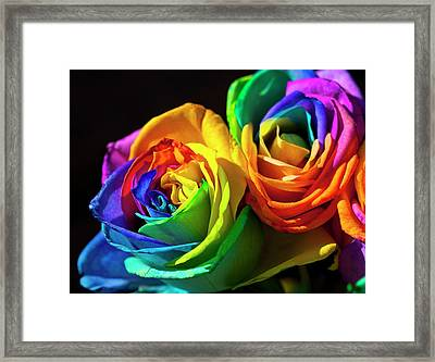 Rainbowed Roses Framed Print by Ian Gowland