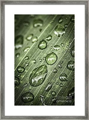 Raindrops On Green Leaf Framed Print by Elena Elisseeva