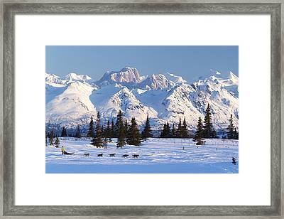 Recreational Dog Mushing In Denali Framed Print by Jeff Schultz