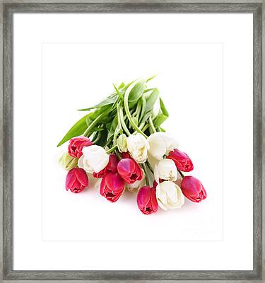 Red And White Tulips Framed Print by Elena Elisseeva