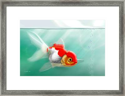Red Cap Goldfish Framed Print by John Wills