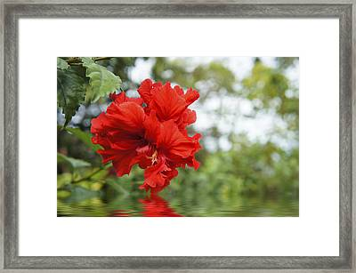 Red Flowers Framed Print by Aged Pixel