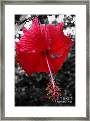 Red Hibiscus Framed Print by Cheryl Young