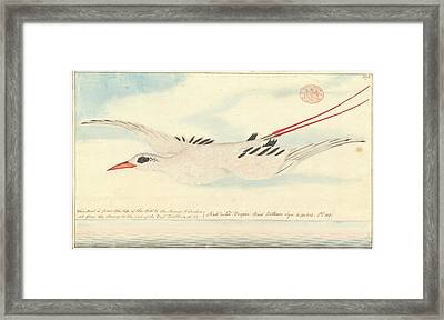 Red-tailed Tropicbird Framed Print by Natural History Museum, London