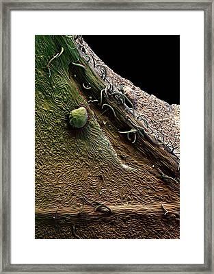 Redcurrant Leaf Trichomes Framed Print by Stefan Diller