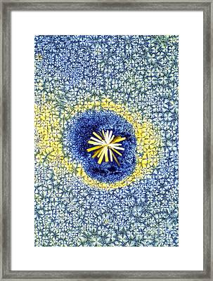 Retinoic Acid Crystal Light Micrograph Framed Print by David Parker