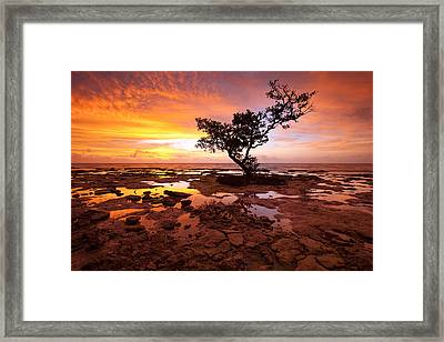 Reverence  Framed Print by Patrick Downey