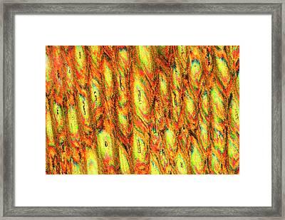 Rhinoceros Horn Framed Print by Steve Lowry