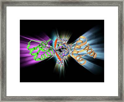Rna-editing Enzyme Framed Print by Laguna Design
