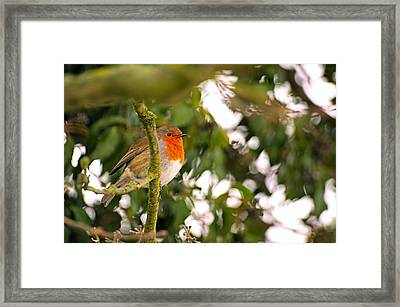 Robin Framed Print by Dave Woodbridge