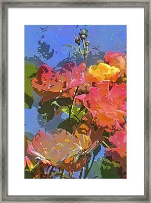 Rose 208 Framed Print by Pamela Cooper