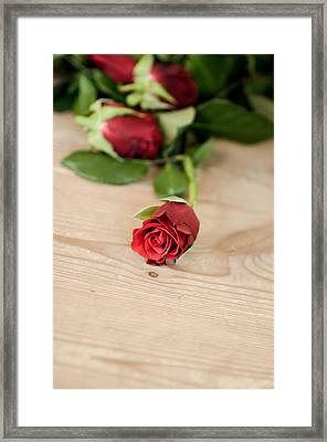 Rose Framed Print by Mirra Photography