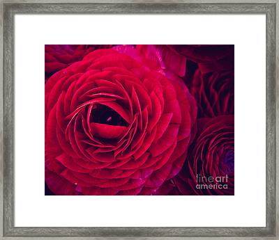 Ruby Red Framed Print by Ana V Ramirez