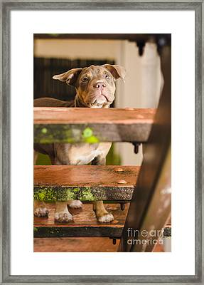 Sad Lost Puppy Dog Looking Up Steps Of A House Framed Print by Jorgo Photography - Wall Art Gallery