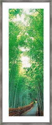 Sagano Kyoto Japan Framed Print by Panoramic Images