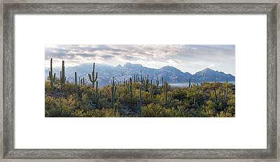 Saguaro Cactus With Mountain Range Framed Print by Panoramic Images