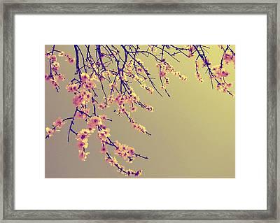 Sakura Framed Print by Marianna Mills