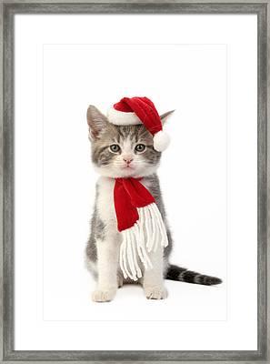 Santa Cat Framed Print by Greg Cuddiford