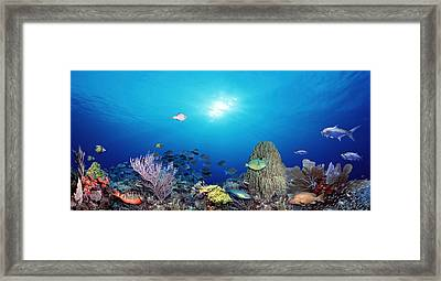 School Of Fish Swimming In The Sea Framed Print by Panoramic Images