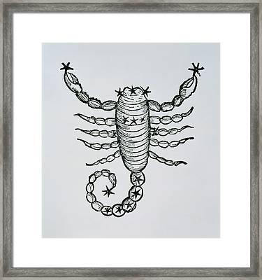 Scorpio Framed Print by Italian School