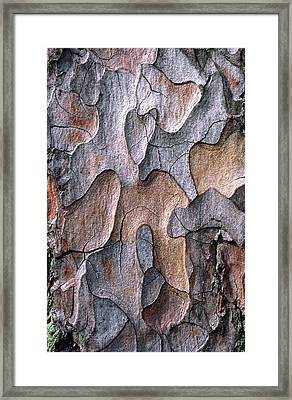 Scots Pine Bark Abstract Framed Print by Nigel Downer