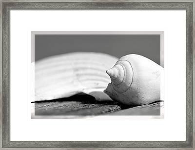 Sea Shells Framed Print by Toppart Sweden