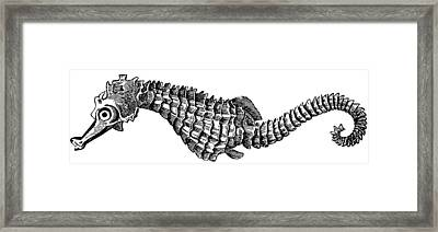 Seahorse Framed Print by Unknown