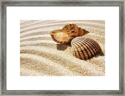 Seashell And Conch Framed Print by Carlos Caetano