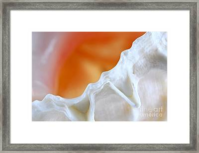 Seashell Detail Framed Print by Elena Elisseeva