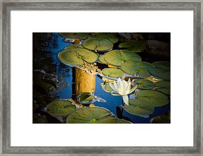Serenity Framed Print by Sara Frank